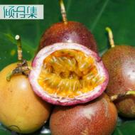 广西百香果3/5斤 紫香一号酸甜西番莲鸡蛋果 新鲜水果一件代发