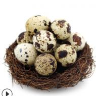 鹌鹑蛋105枚专业包装一件代发 破损包赔 新鲜农家鹌鹑蛋