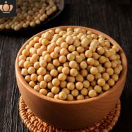 直批高蛋白新黄豆非转基因豆子批发新鲜大豆优质生黄豆10斤起批