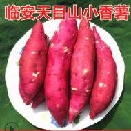 现挖小红薯批发黄心薯临安天目山小香薯山芋板栗新鲜地瓜红薯5斤