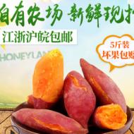 临安天目山小香薯现挖 黄心小红薯山芋板栗 5斤装地瓜红薯批发