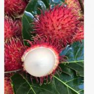 越南进口红毛丹当季现摘红毛丹毛荔枝热带水果孕妇水果一件代发