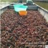 一旦生态农业的养殖塘口直接批发供应小龙虾农副产品