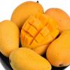 海南小台芒芒果现摘现发新鲜时令水果超甜多汁小台农芒果一件代发