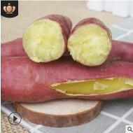 陕西现挖沙地新鲜 板栗红薯5斤小番薯糖心蜜薯农家地瓜黄心香烤