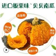 山东真 贝贝南瓜 5斤 板栗南瓜 新鲜蔬菜 迷你小南瓜贝贝辅食代发