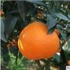 产地直发四川爱媛38号果冻橙5斤装 应季水果新鲜柑橘子手剥橙批发