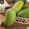 新品越南芒果 甜心芒9斤装小金煌芒 新鲜水果 当季芒果批发一件代