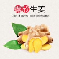 特产有机种植新鲜生姜 产地直供现货现发 批发零售质量可靠