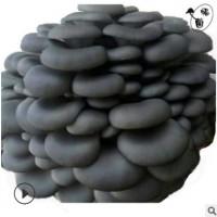 黑平菇纯原种 菌种高产优质系列 从业三十五年啦