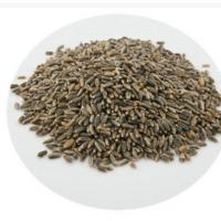 青藏高原青海基地种植精选小黑麦(黑燕麦)