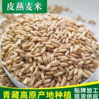 青藏高原青海基地种植澳洲皮燕麦脱皮燕麦米燕麦米散装批发
