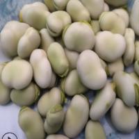 云南新鲜蚕豆带壳嫩蚕豆现摘罗汉豆青蚕豆