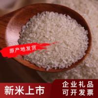 碎大米酿酒食用饲料 袋装五谷杂粮食品厂用碎米 酿酒熬粥碎米头