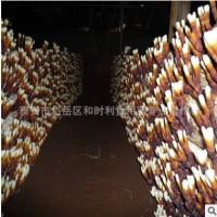 产地直销鹿角芝菌棒产量高价格低免费提供技术优质鹿角芝菌棒