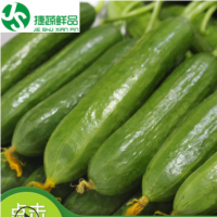 荷兰小黄瓜黄瓜新鲜小黄瓜水果蔬菜无刺产地直供小黄瓜小青瓜