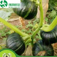 贝贝南瓜新鲜贝贝南瓜板栗味新鲜蔬菜产地直供批发小南瓜宝宝辅食