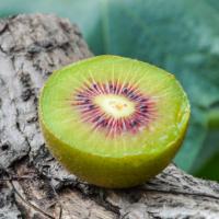 四川红心猕猴桃蒲江新鲜水果甜蜜可口奇异果当季采摘发货