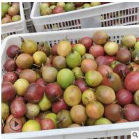 百香果 农场直销热带当季水果百香果一件代发 新鲜酸甜可口鸡蛋果