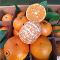 【现货】广西沃柑贡柑 新鲜包邮皇帝柑桔子现摘橘子水果一件代发