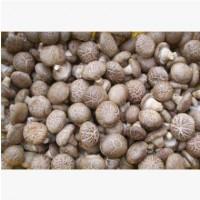 香菇菌包食用菌菌种蘑菇菌袋平菇菌棒可加工定做各种尺寸欢迎咨询