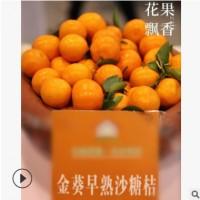 包邮直销广东金葵砂糖橘果树苗 早熟优质高产嫁接宽皮柑橘苗