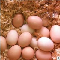 绿皮初生蛋正品现货闪发官方可订制散装批发