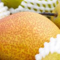 现摘现发红香酥梨10斤装 应季水果支持一件代发香梨包邮梨子