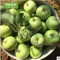 产地直销新鲜青苹果10斤装当季水果现摘现发一件代发嘎啦青苹果