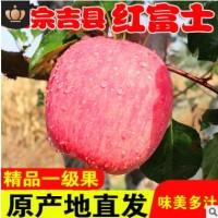 山西吉县苹果水果红富士苹现摘现发山西特产红富士香脆汁多包邮