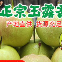 山西隰县玉露香梨脆甜多汁细嫩无渣新鲜水果梨子新鲜包邮