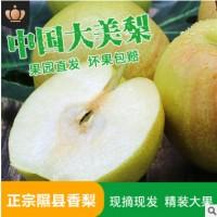 现摘山西隰县玉露香梨子特大果6粒装香梨产地直供应季新鲜水果礼