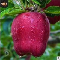 果园现摘甘肃天水蛇果新鲜水果香甜脆口花牛苹果10斤装花牛苹果
