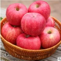 果园直销纸十膜红富士精品果泡沫礼盒装新鲜苹果水果10斤红富士
