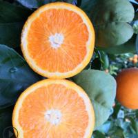 重庆伦晚脐橙新鲜水果橙子当季整箱5斤奉节甜橙秭归超甜包邮橙子