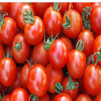 绿欣园新鲜西红柿
