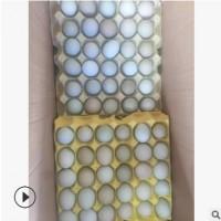 四川农产品绿壳乌鸡蛋新鲜生态土草鸡蛋批发林下散养营养产地直销