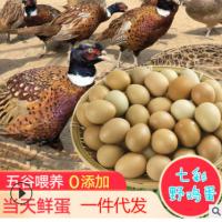 金鸡关七彩斑斓四川野鸡蛋农家源产地支持一件代发批发雅安山鸡蛋