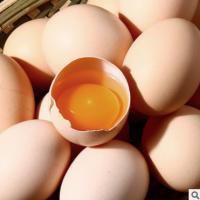 四川巴山土鸡蛋直销新鲜鸡蛋 山林自养粮食白粉壳红心蛋整箱批发