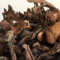 供应东北特产野生原榛蘑菇