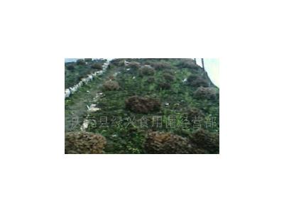 【批量】食用菌灰树花大花(埋土)一级干灰树花2