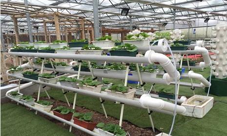 广西加快现代特色农业发展步伐