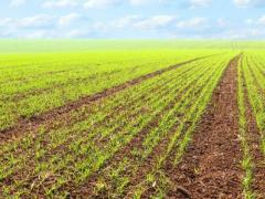 小麦种植这样冬前管理,年后返青快