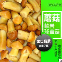 出口品质 球盖菇 A级食用菌盐渍 清水球盖菇 蘑菇 货源充足