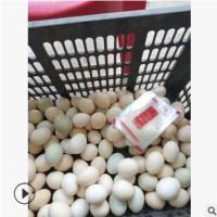 纯手工腌制五香野生鸡蛋,咸淡适中泥腌鸡蛋,流沙溢油麻酱鸡蛋