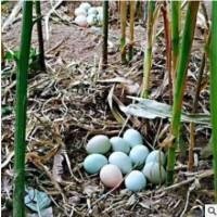 批发正宗农家散养 土鸡蛋 新鲜天然无公害 营养丰富 土鸡蛋礼盒装