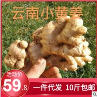 10斤云南小黄姜生姜老姜月子姜罗平姜农家自种新鲜土姜姜黄鲜姜5