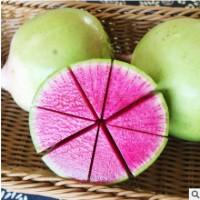 5斤装绿皮红心水果萝卜农家种新鲜心里美萝卜泰安名吃山东大萝卜