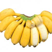 广西新鲜小米蕉9斤新鲜采摘现摘现发香蕉banana当季水果应季包邮