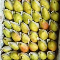 无核梨,10斤包装46.8